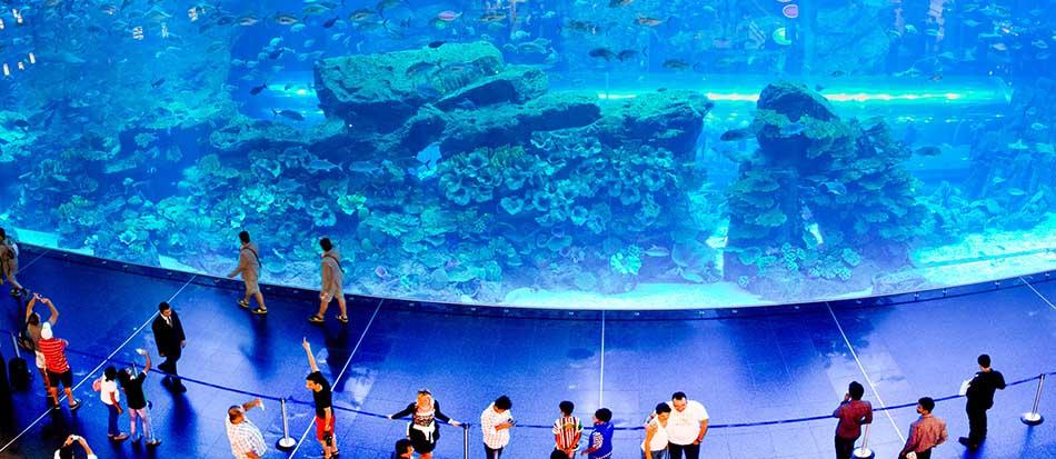 Dubai Aquarium and discovery Centre, Dubai