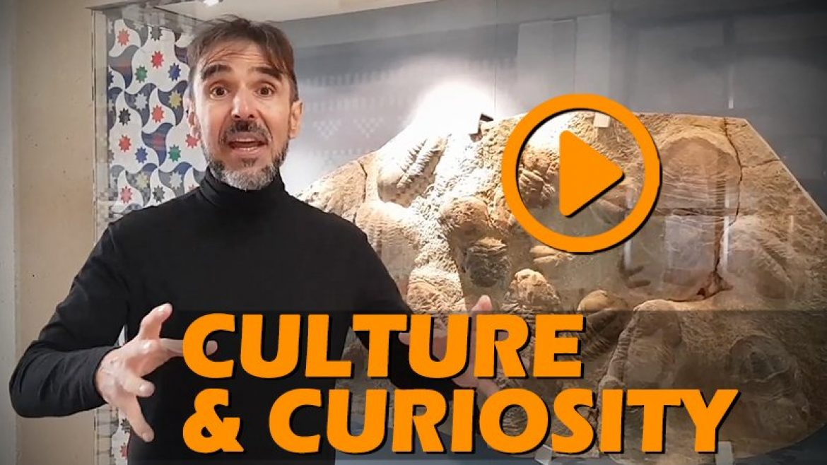 Knight's of Transformation: Organizational culture and curiosity!
